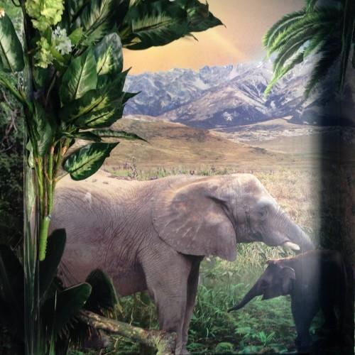 Elephant Themed Wall