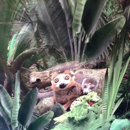 Meerkat Themed Wall