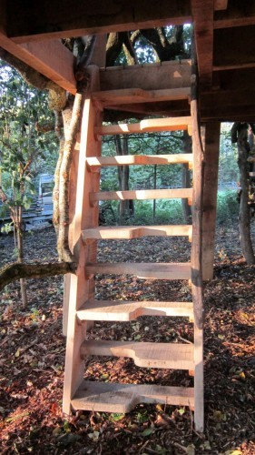 Moseley Old Hall Rustic Forest Tree House Play Area Ladder