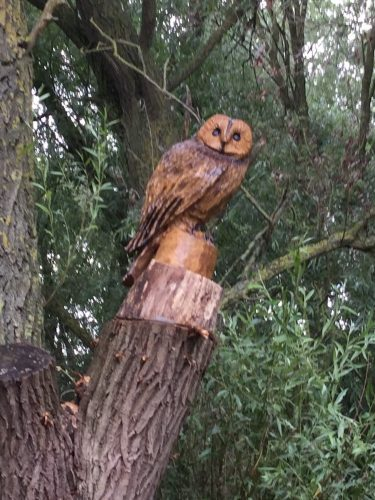 owl carving in tree 1
