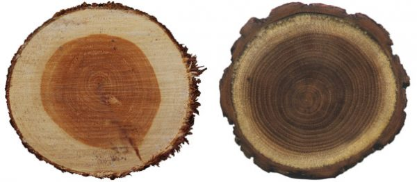 sapwood heartwood comparison